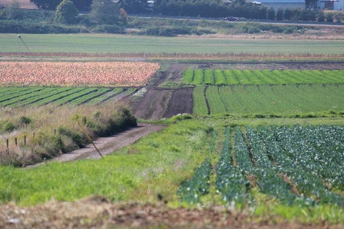 Аренда участков сельхозназначения